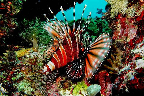 3D2N Amazing Bunaken Diving